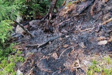 03.07.2021: Einsatz Waldbrand